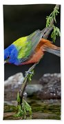 Thirsty Painted Bunting Beach Towel