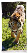 Thirsty Tiger Beach Towel