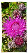 Thistle In Saint Mary's Ecological Reserve-newfoundland Beach Towel