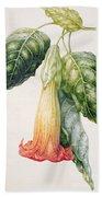 Thorn Apple Flower From Ecuador Datura Rosei Beach Towel