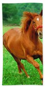 Thoroughbred Filly Beach Towel