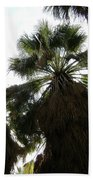 Thousand Palms Canyon Beach Towel