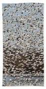 Thousands Of Snow Geese Beach Towel