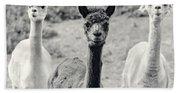 Three Alpaca Friends Beach Towel
