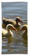 Three Baby Ducks Swimming Beach Towel