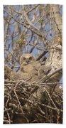 Three Baby Owls  Beach Sheet