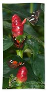 Three Butterflies Beach Towel