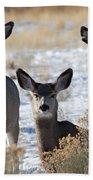Three Deer Beach Towel