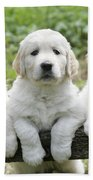 Three Golden Retriever Puppies Beach Towel