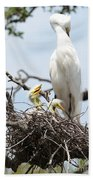 Three Great Egret Chicks In Nest Beach Towel by Carol Groenen