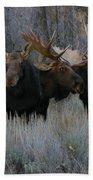 Three Moose In The Woods Beach Towel