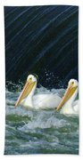 Three Pelicans Hanging Out  Beach Towel