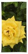 Three Yellow Roses In Rain Beach Towel
