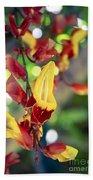 Thunbergia Mysorensis - Trumpetvine Beach Towel