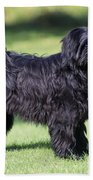 Tibetan Terrier Dog Standing Beach Towel