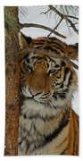 Tiger 2 Beach Towel