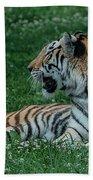 Tiger At Rest 4 Beach Towel