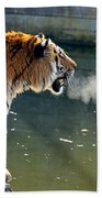 Tiger Breathing Into Cold Air By The Water Beach Towel