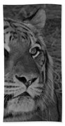 Tiger Bw Beach Towel