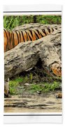 Tiger By The Log Beach Towel