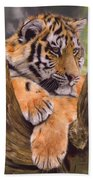 Tiger Cub Painting Beach Towel by David Stribbling