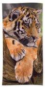 Tiger Cub Painting Beach Sheet