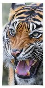 Tiger Growl Beach Towel