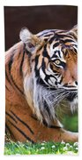Tiger In The Sun Painting Beach Towel