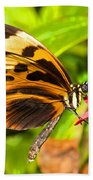 Tiger Mimic Butterfly Beach Towel