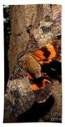 Tiger Moth Flight Beach Towel
