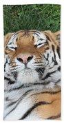 Tiger Nap Time Beach Towel