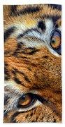 Tiger Peepers Beach Towel