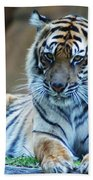 Tiger Posing Beach Towel