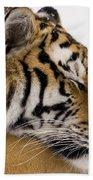 Tiger Sleeping Beach Sheet
