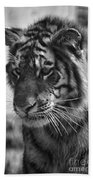 Tiger Stare In Black And White Beach Towel