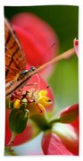 Tiger Stripped Butterfly Beach Towel