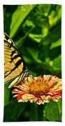 Tiger Swallowtail And Peppermint Stick Zinnias Beach Towel