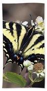 Tiger Swallowtail Butterfly 2a Beach Towel