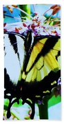 Tiger Swallowtail Butterfly  Beach Towel