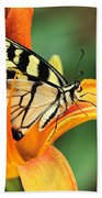 Tiger Swallowtail Butterfly On Daylily Beach Towel