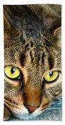 Tiger Time Beach Sheet