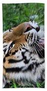 Tiger Tongue Beach Towel