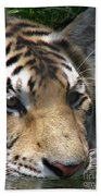 Tiger Water Beach Towel
