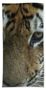 Tiger You Looking At Me Beach Towel