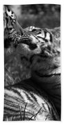 Tigers Kissing Beach Towel
