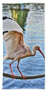 Tightrope Walking Ibis Beach Towel