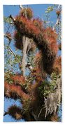 Tikal Furry Tree Closeup Beach Towel