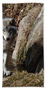 Timber Wolf In Pond Beach Towel