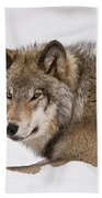 Timber Wolf Pictures 1028 Beach Towel
