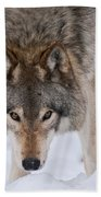 Timber Wolf Pictures 1042 Beach Towel